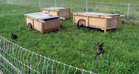 plasa-iepuri-categ